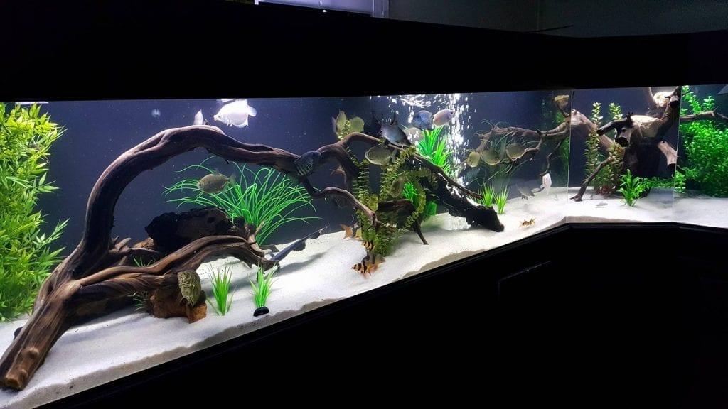 Usage in aquarium