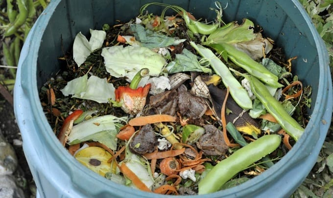 Waste In Compost