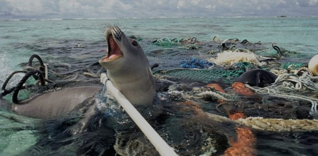 Plastic effects on ocean animals