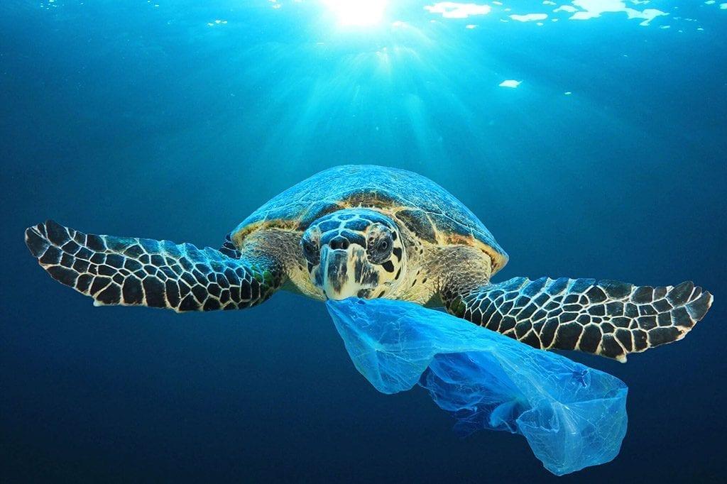 Plastics bags