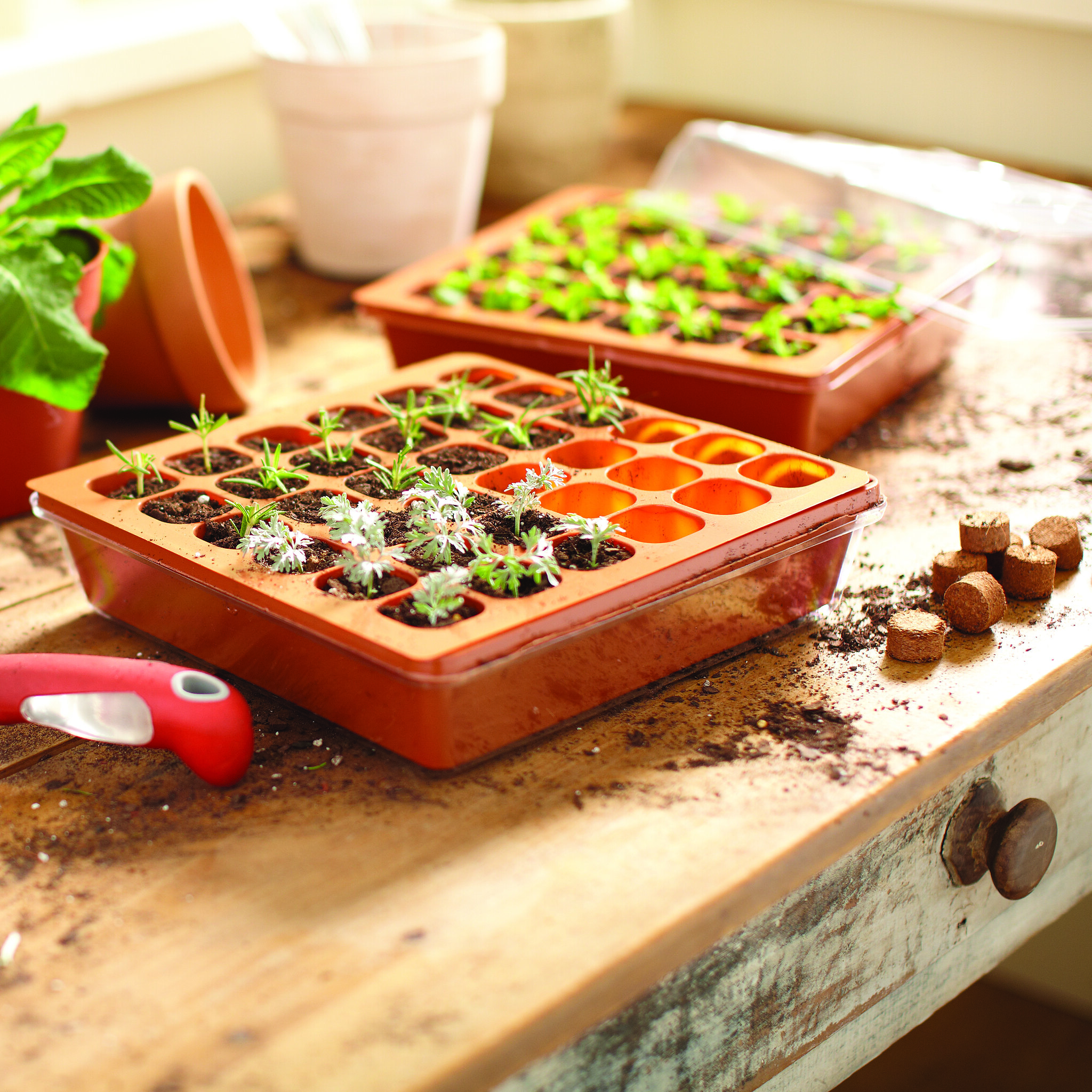 best seed starter kit on a table surrounded by soil